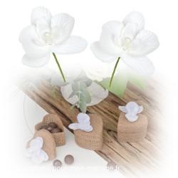 6 mini-orchidées blanches