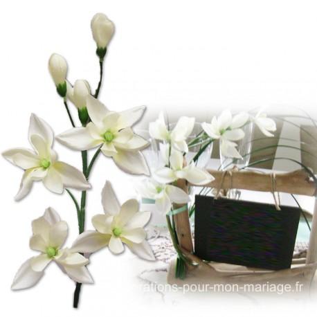 Orchidées blanches sur branche