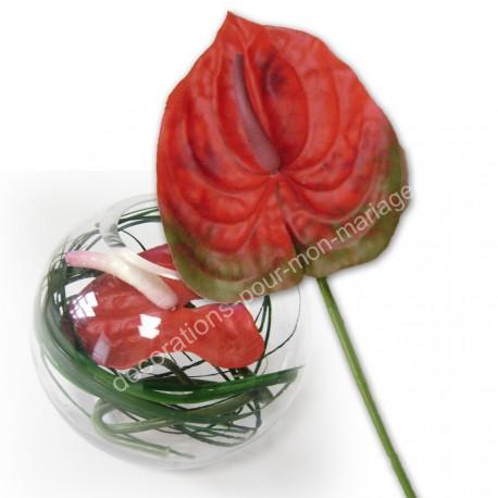 Fleur anthurium rouge
