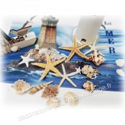 coquillages marins décos