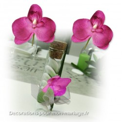 6 mini-orchidées fuchsia