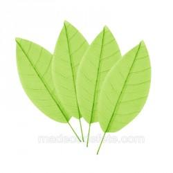 12 feuilles squelettes vert anis
