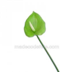 Fleur d'anthurium verte