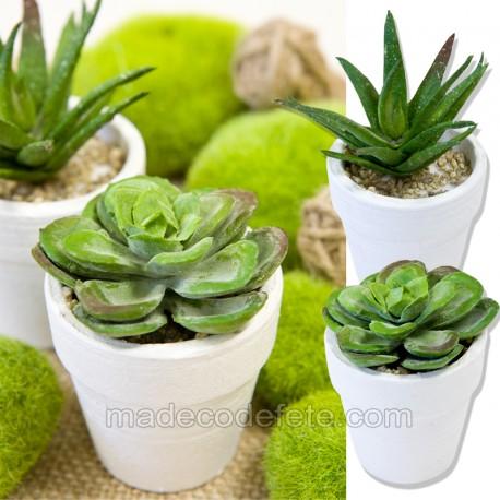Succulentes pots en lot de 2