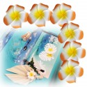6 fleurs tiaré orange