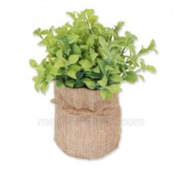 Plante verte dans pot en jute