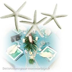 Petite étoile de mer fine blanche