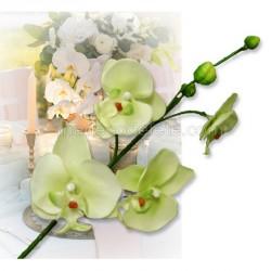 Branche orchidées vertes