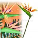 Fleur strelitzia oiseau du paradis